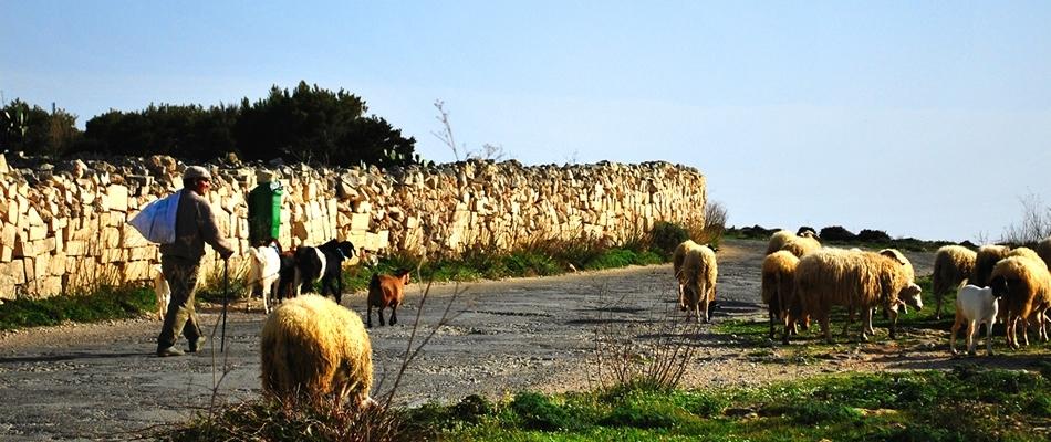 Malta's Countryside